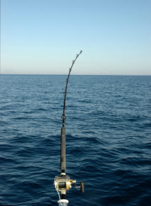 canna in pesca