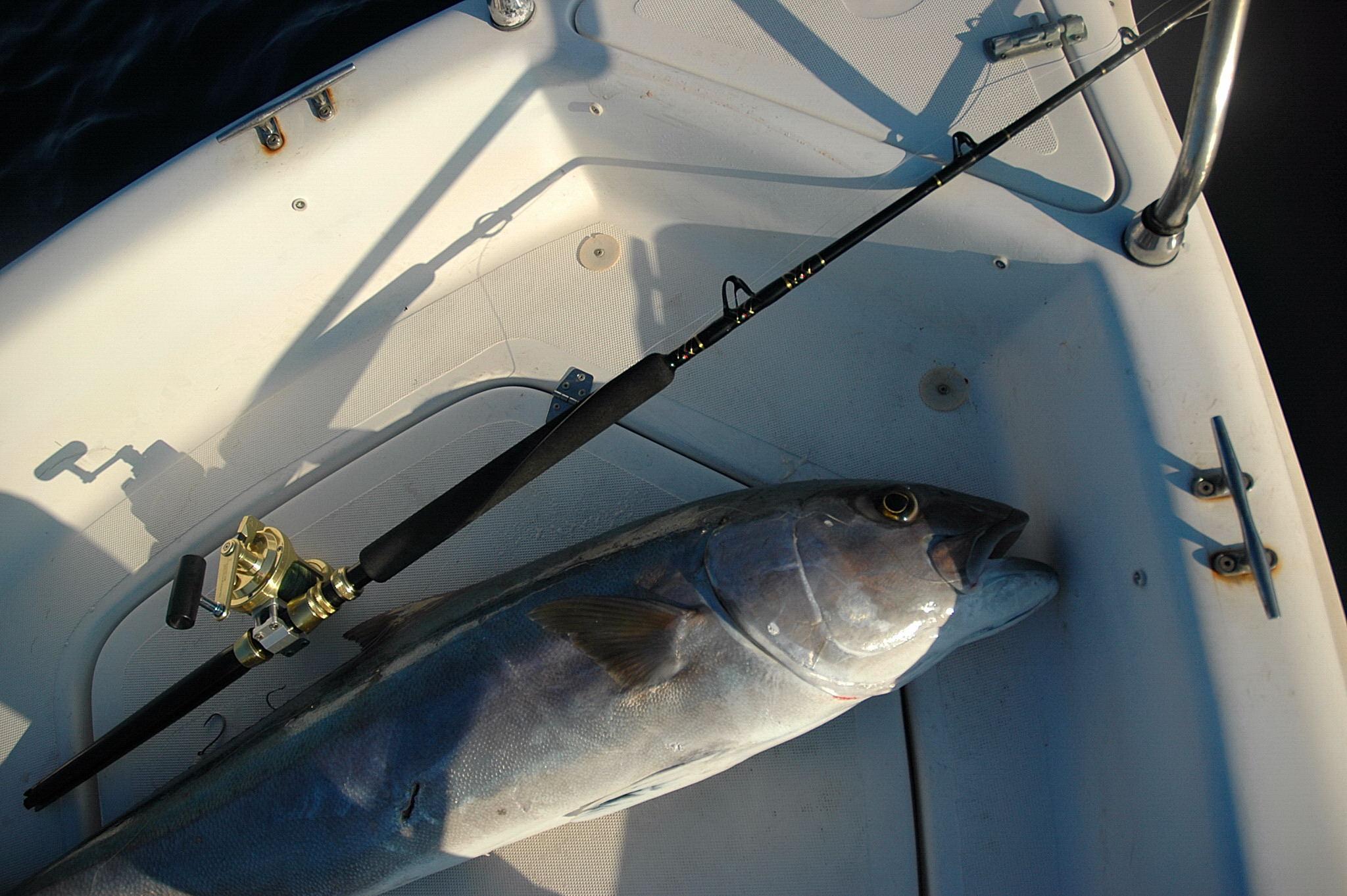 come pescare  a traina con il vivo
