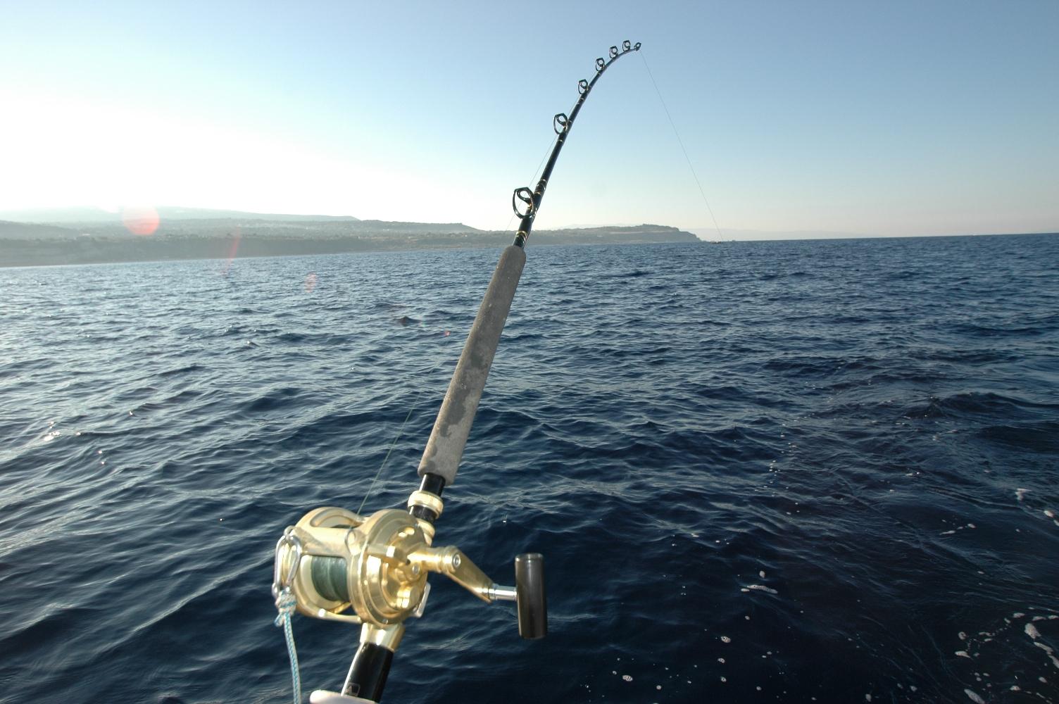 traina con il vivo , canna in pesca