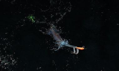 traina ai calamari