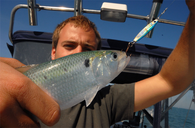 pesca delle esche
