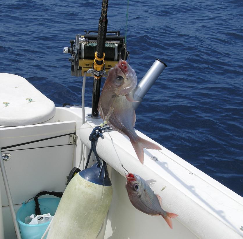 occhioni kristal fishing